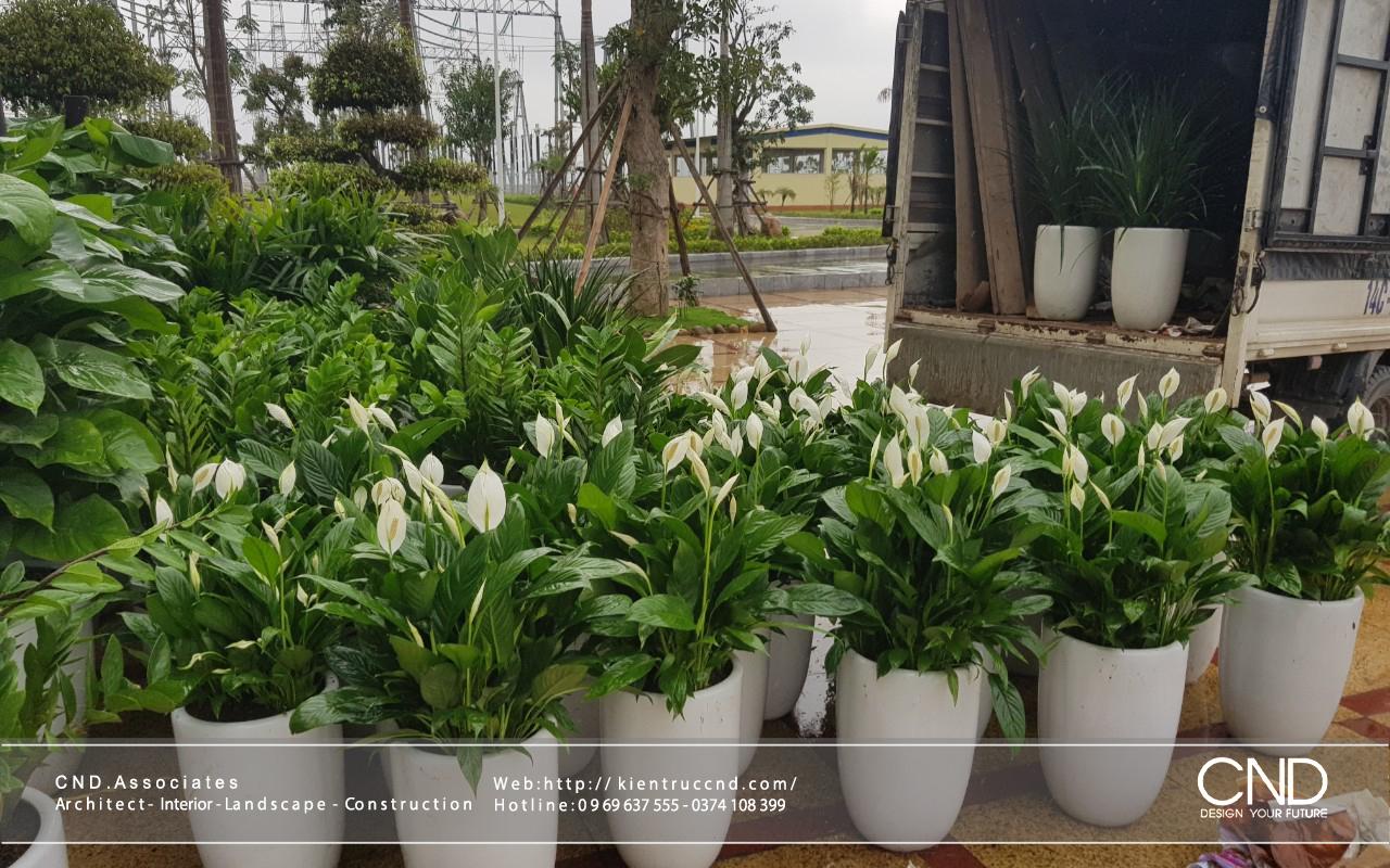 Dịch vụ bán và cho thuê cây nội thất - Cảnh quan CND, Thành phố Vinh, Nghệ An